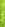 Rökelse Golden Lotus - Lemongrass